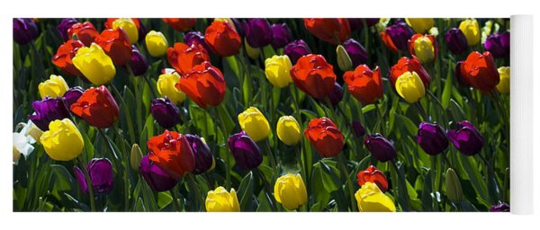 Multicolored Tulips At Tulip Festival. Yoga Mat