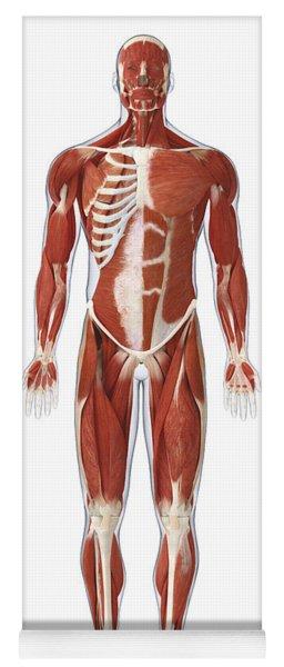 Muscular System, Illustration Yoga Mat