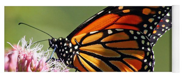 Nectaring Monarch Butterfly Yoga Mat