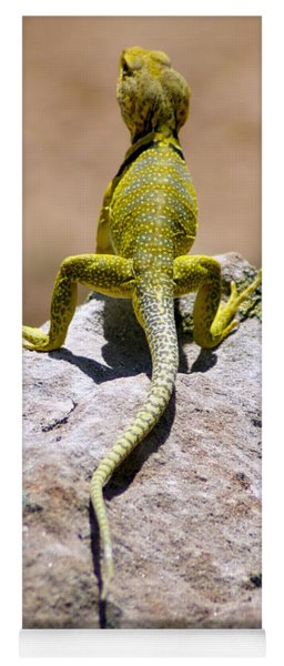 New Photographic Art Print For Sale Lizard Back Ghost Ranch New Mexico Yoga Mat