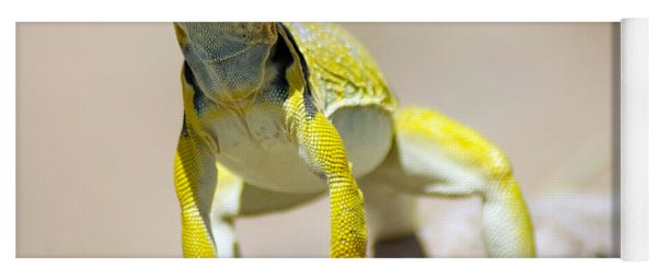 New Photographic Art Print For Sale Yellow Lizard Ghost Ranch New Mexico Yoga Mat
