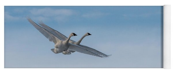 Yoga Mat featuring the photograph Trumpeter Swan Tandem Flight I by Patti Deters