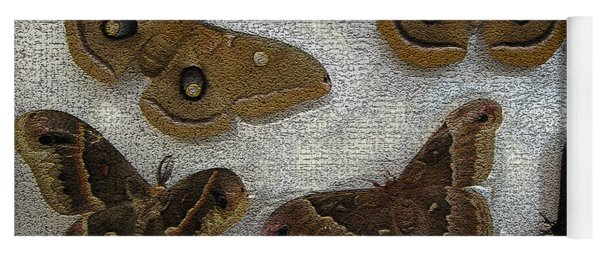 North American Large Moth Collection Yoga Mat