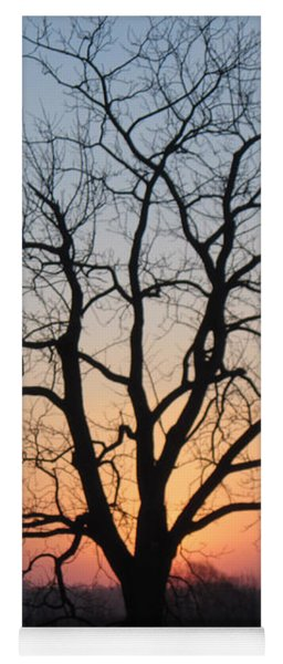 November Walnut Tree At Sunrise Yoga Mat