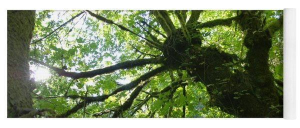 Old Growth Tree In Forest Yoga Mat