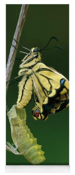 Oldworld Swallowtail Emerging Yoga Mat