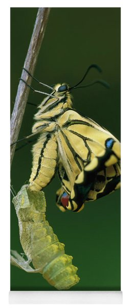 Yoga Mat featuring the photograph Oldworld Swallowtail Emerging by Thomas Marent