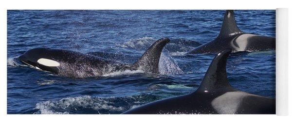 Orca Pod Surfacing Off Hokkaido  Yoga Mat