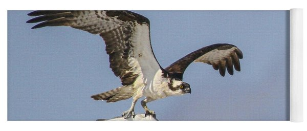 Osprey With Dinner Yoga Mat