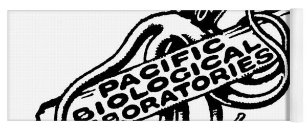 Pacific Biological Laboratories Of Pacific Grove Circa 1930 Yoga Mat