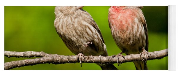 Pair Of House Finches In A Tree Yoga Mat