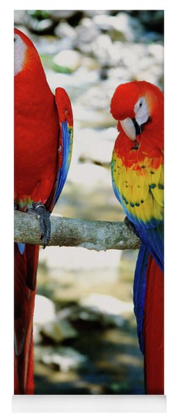 Pair Of Scarlet Macaws On Branch Yoga Mat