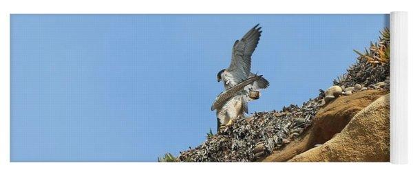 Peregrine Falcons - 3 Yoga Mat