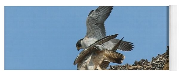 Peregrine Falcons - 4 Yoga Mat