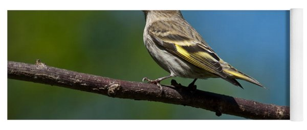 Pine Siskin Perched On A Branch Yoga Mat