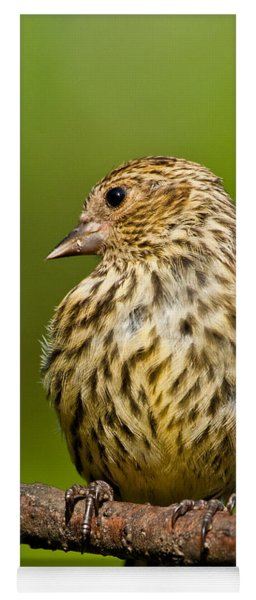 Pine Siskin With Yellow Coloration Yoga Mat