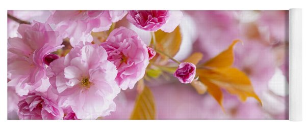 Pink Cherry Blossoms In Spring Orchard Yoga Mat