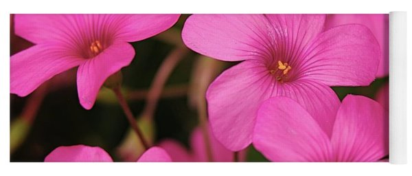 Pink Phlox Yoga Mat