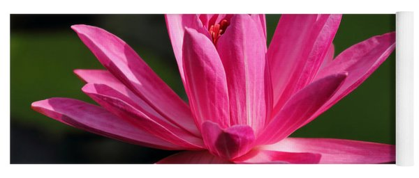 Pink Water Lily Yoga Mat
