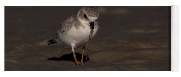 Piping Plover Photo Yoga Mat