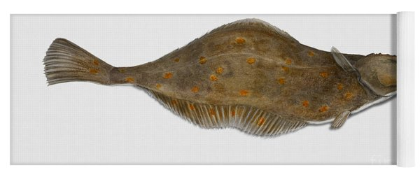 Plaice Pleuronectes Platessa - Flat Fish Pleuronectiformes - Carrelet Plie - Solla - Punakampela Yoga Mat