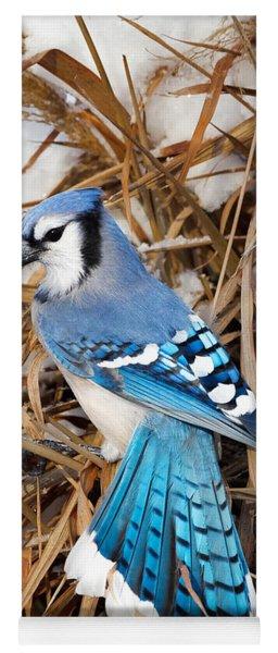 Portrait Of A Blue Jay Yoga Mat