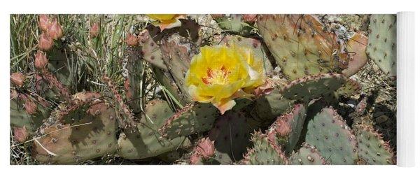 Prickly Pear Blooming In Big Bend Yoga Mat