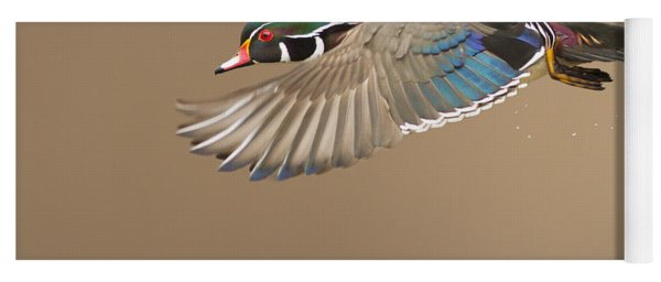 Probably The Most Beautiful Of All Duck Species Yoga Mat