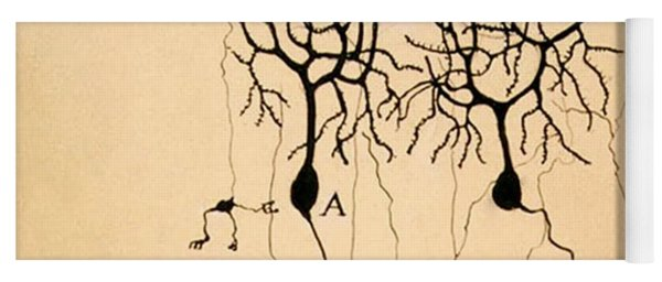 Purkinje Cells By Cajal 1899 Yoga Mat