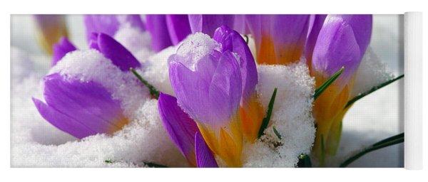 Purple Crocuses In The Snow Yoga Mat