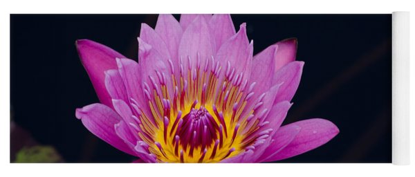 Purple Lotus Flower Yoga Mat