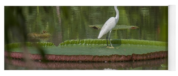 Queen Victoria Water Lily Pad With Little Egret Dthb1618 Yoga Mat