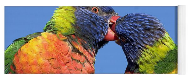Rainbow Lorikeets Yoga Mat