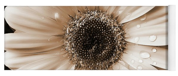 Raindrops On Gerber Daisy Sepia Yoga Mat