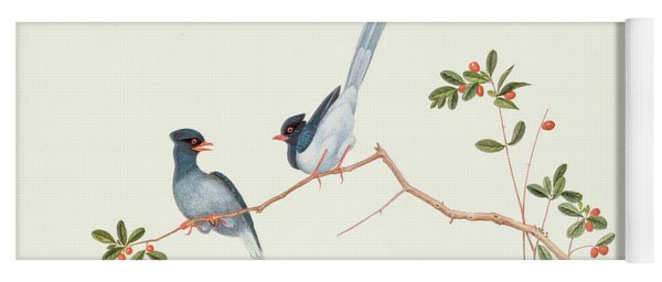 Red Billed Blue Magpies On A Branch With Red Berries Yoga Mat