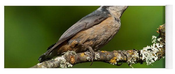 Red Breasted Nuthatch In A Tree Yoga Mat