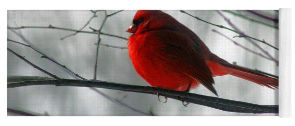 Red Cardinal On Winter Branch  Yoga Mat