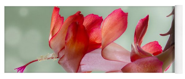 Red Christmas Cactus Bloom Yoga Mat