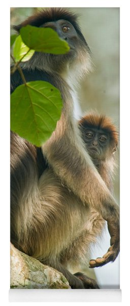 Red Colobus Monkey With Its Young One Yoga Mat