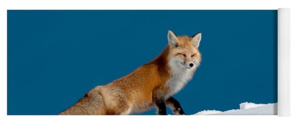 Red Fox Yoga Mat