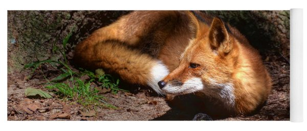 Red Fox Resting Yoga Mat