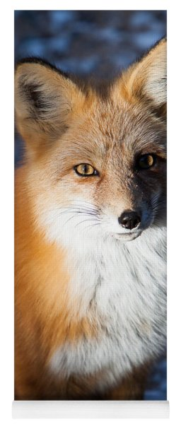 Yoga Mat featuring the photograph Red Fox Standing by John Wadleigh