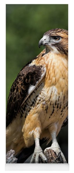 Red Tail Hawk Portrait Yoga Mat