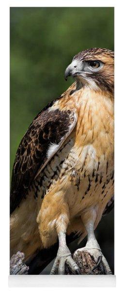 Red Tail Hawk Portrait Yoga Mat