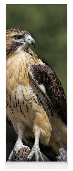 Red Tailed Hawk Yoga Mat