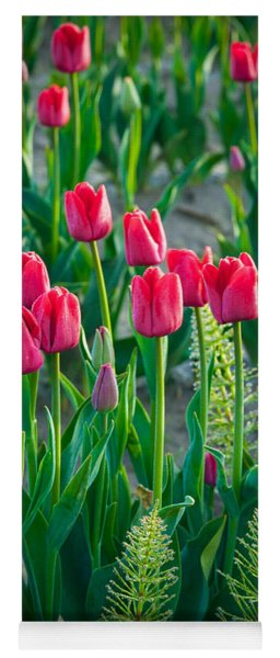 Red Tulips In Skagit Valley Yoga Mat