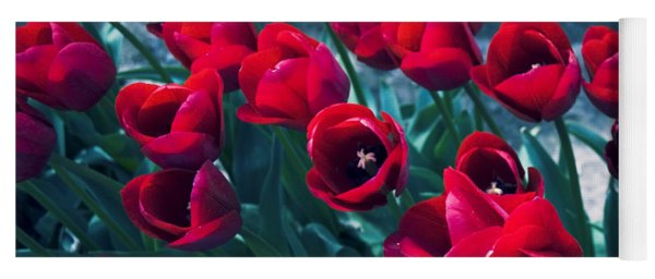 Red Tulips Yoga Mat