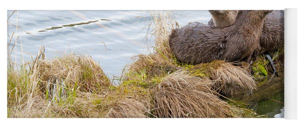 Yoga Mat featuring the photograph River Otters by Gary Beeler