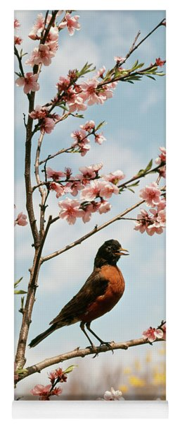 Robin Perched On Tree Branch Yoga Mat