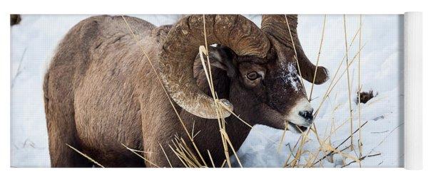 Rocky Mountain Bighorn Sheep Yoga Mat